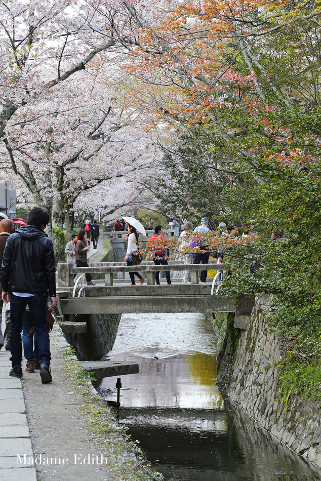 sakura Kioto