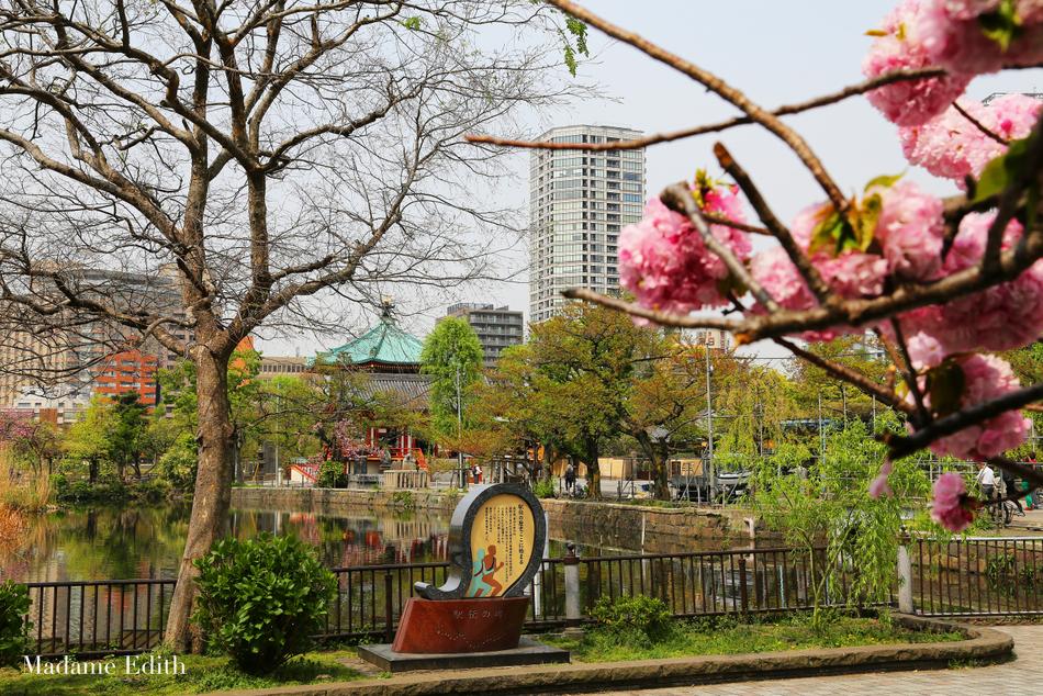 sakura Ueno Park Tokyo