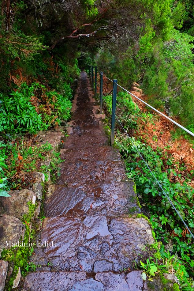 Madera - lewady 25 Fontes i Risco -poziom trudności:
