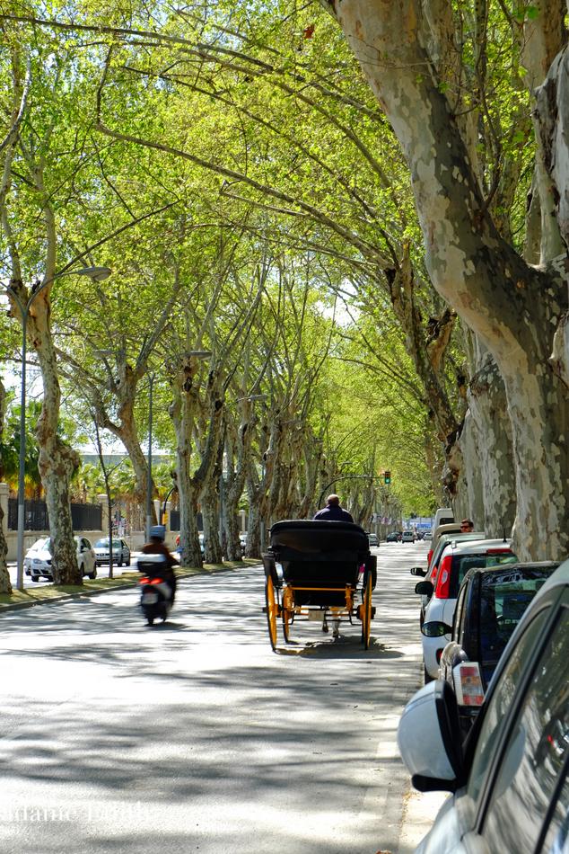 Malaga 29