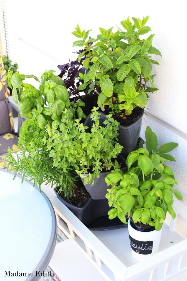 zioła na balkonie