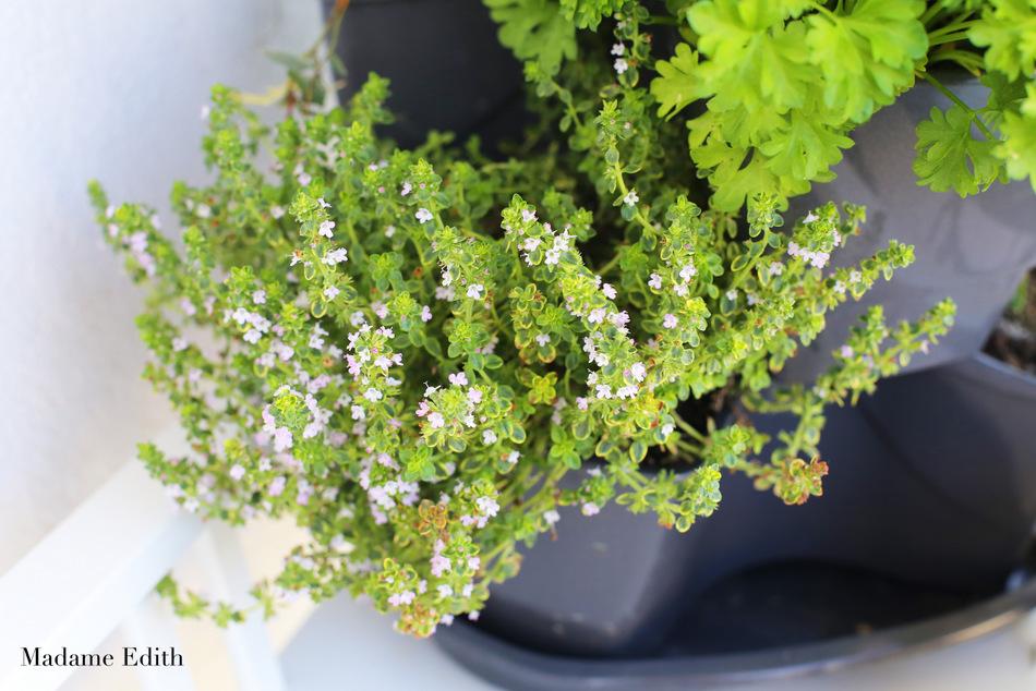 zioła na balkonie 1