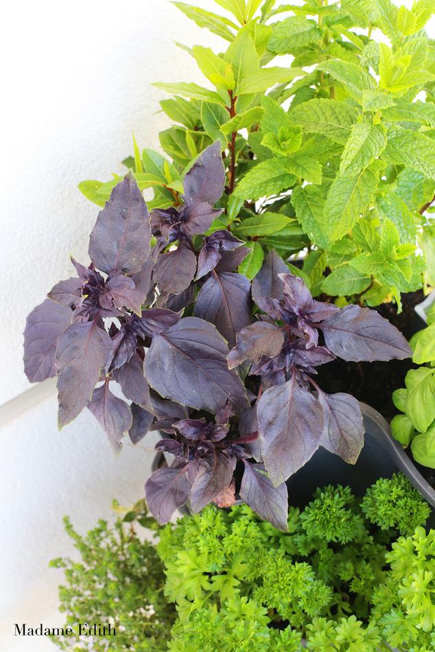 zioła na balkonie 3