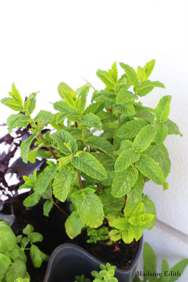 zioła na balkonie 8
