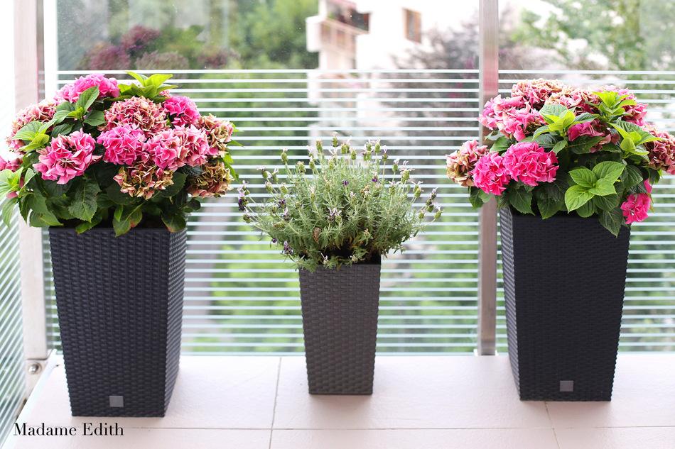ogród na balkonie 11