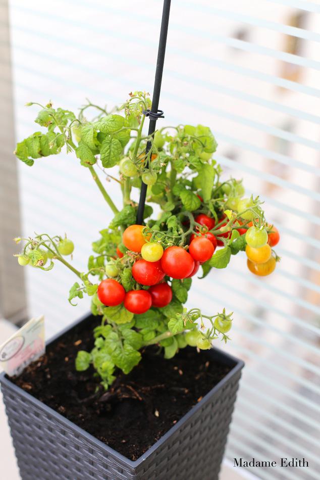 ogród na balkonie 4