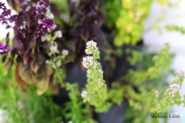 ogród na balkonie 8