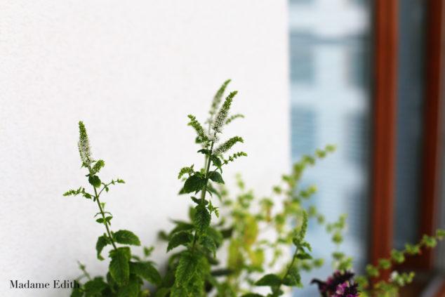 ogród na balkonie 9