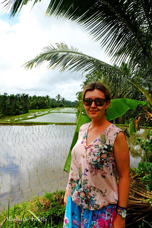 jak rośnie ryż