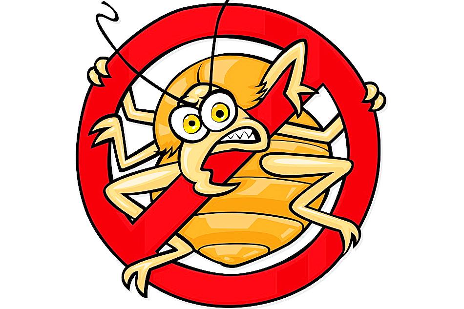 insekty w domu