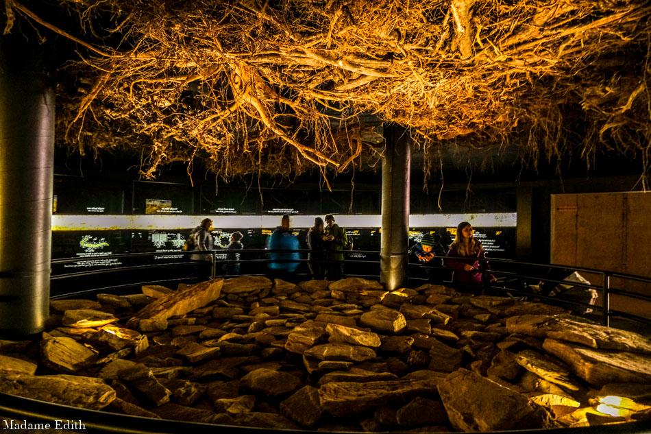 ścieżka w koronach drzew